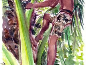 Heiarii In Coco Tree