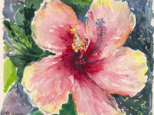 Hibiscus Peche
