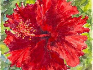 Hibiscus Rouge FrouFrou