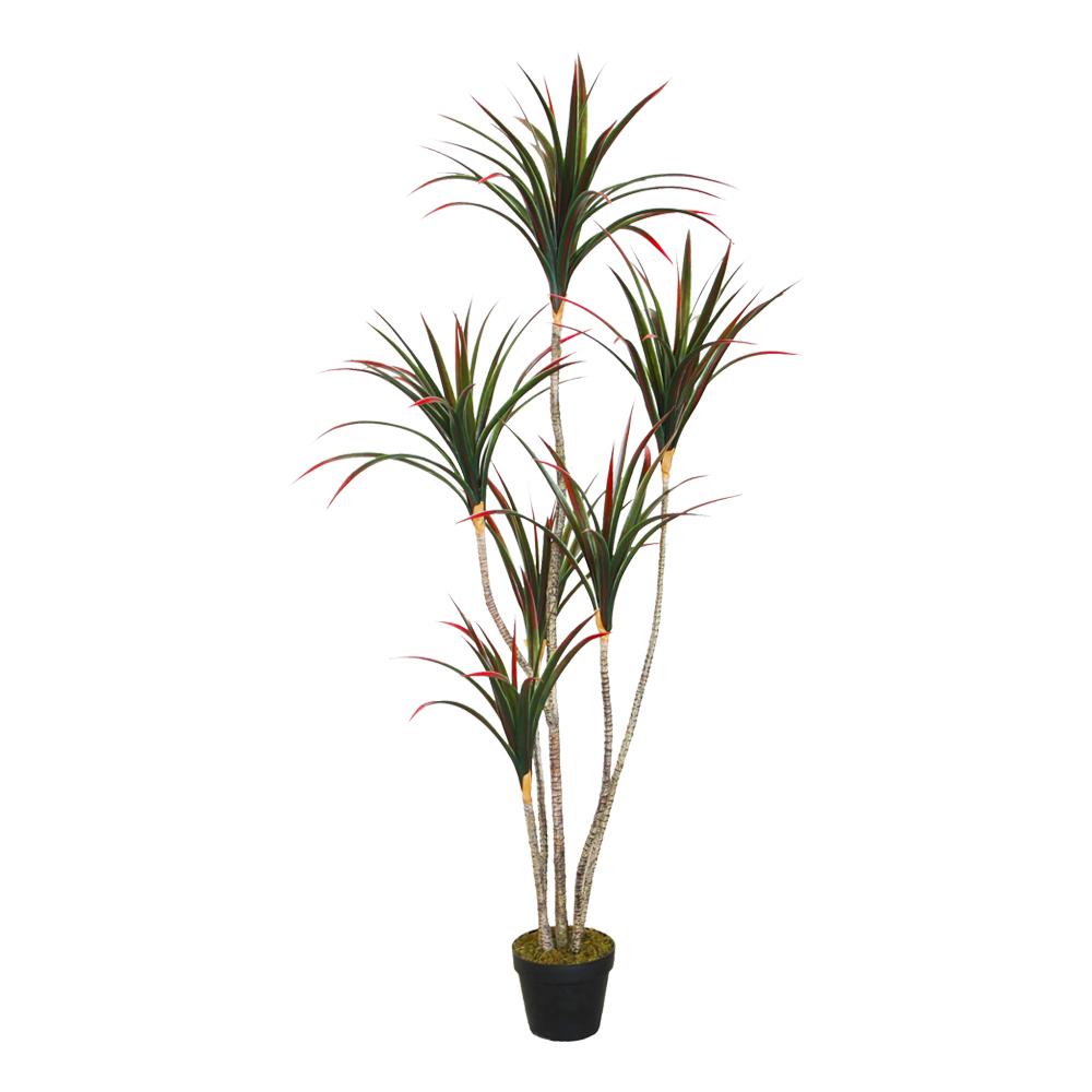 Dracaena Decorative Potted Flower: 160cm 1