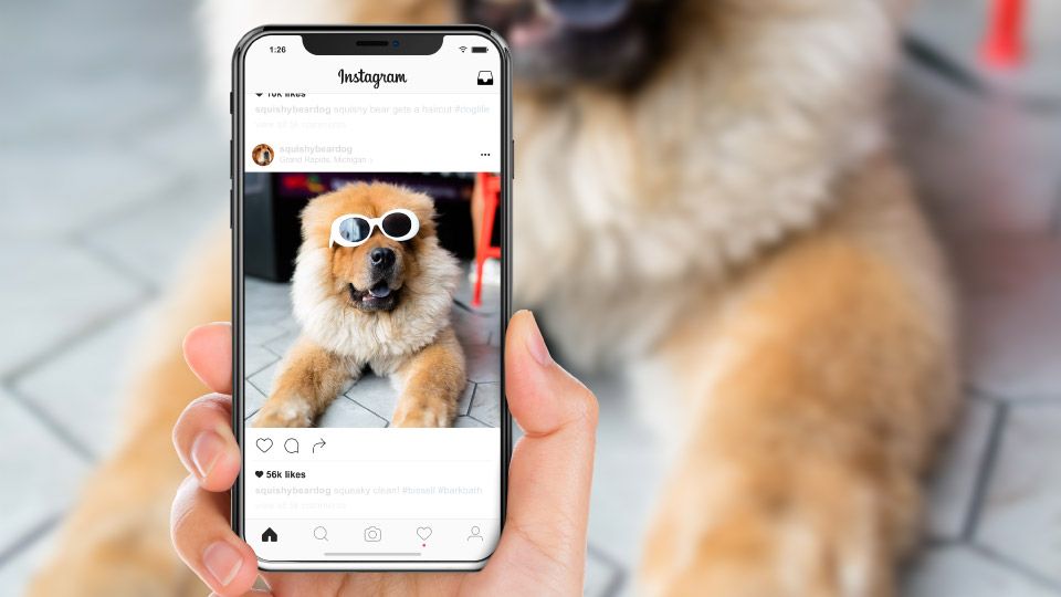 Bissell Bark Bath instagram dog influencers