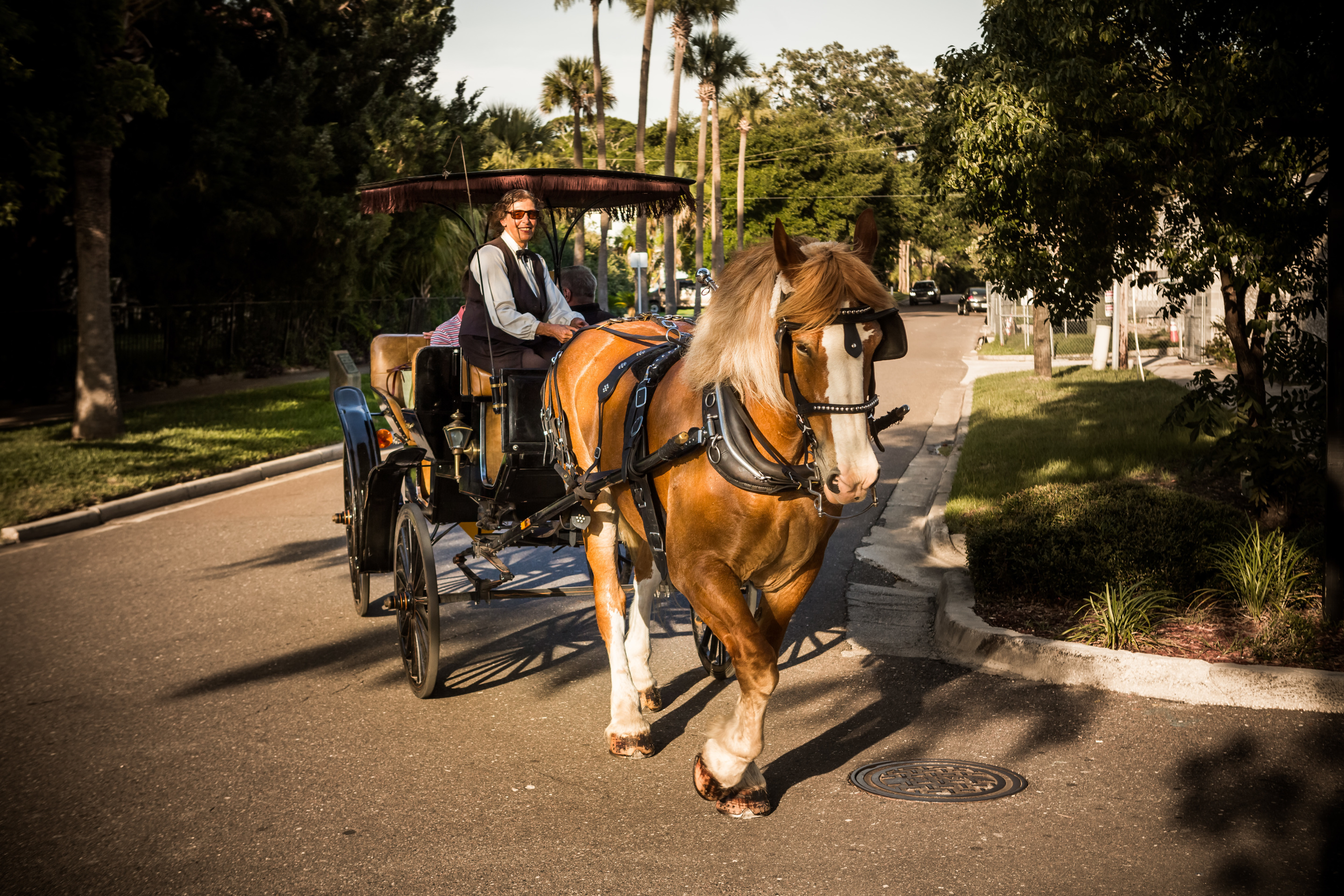 Horse and carriage downtown Amelia Island