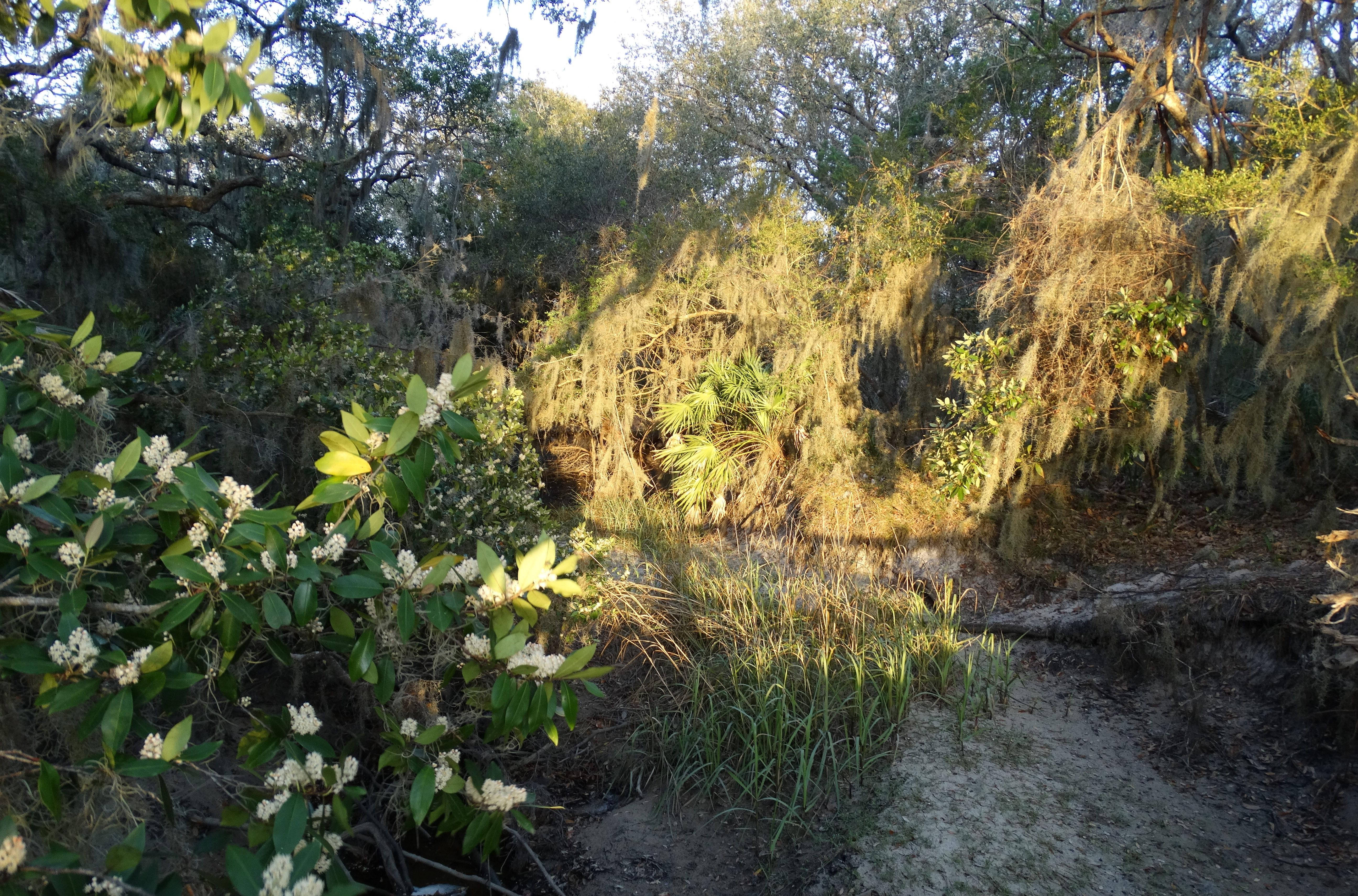 Fort Clinch area foliage
