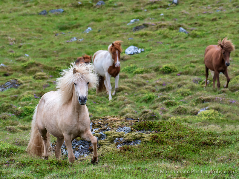Hellnar summer Westfjords Photography Wrokshop Jansen Photo Expeditions