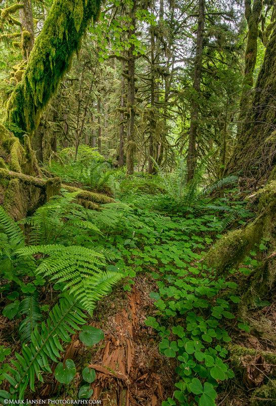 Oregon Photography Workshop