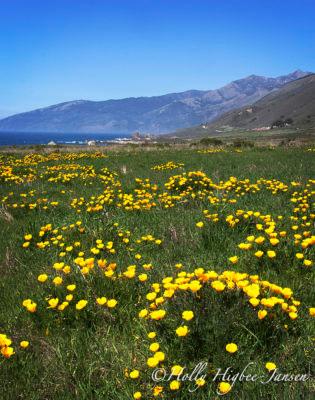 Wildflower photography workshops in Big Sur