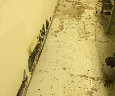 Mold in Basement Remove