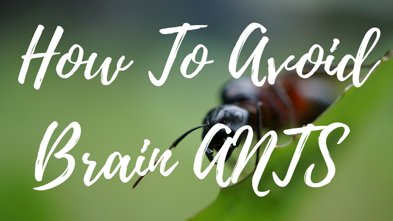 VIDEO: How To Avoid Brain ANTs