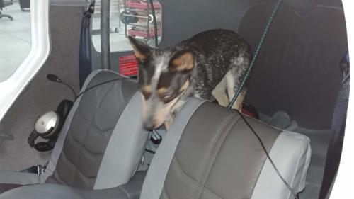 N772J Rear Cabin w Pup a