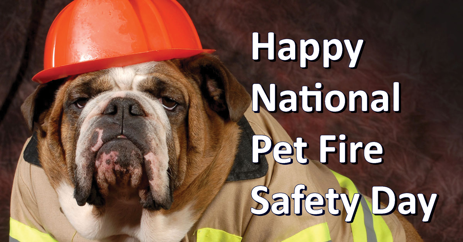 National Pet Fire Safety Day & Safety Tips