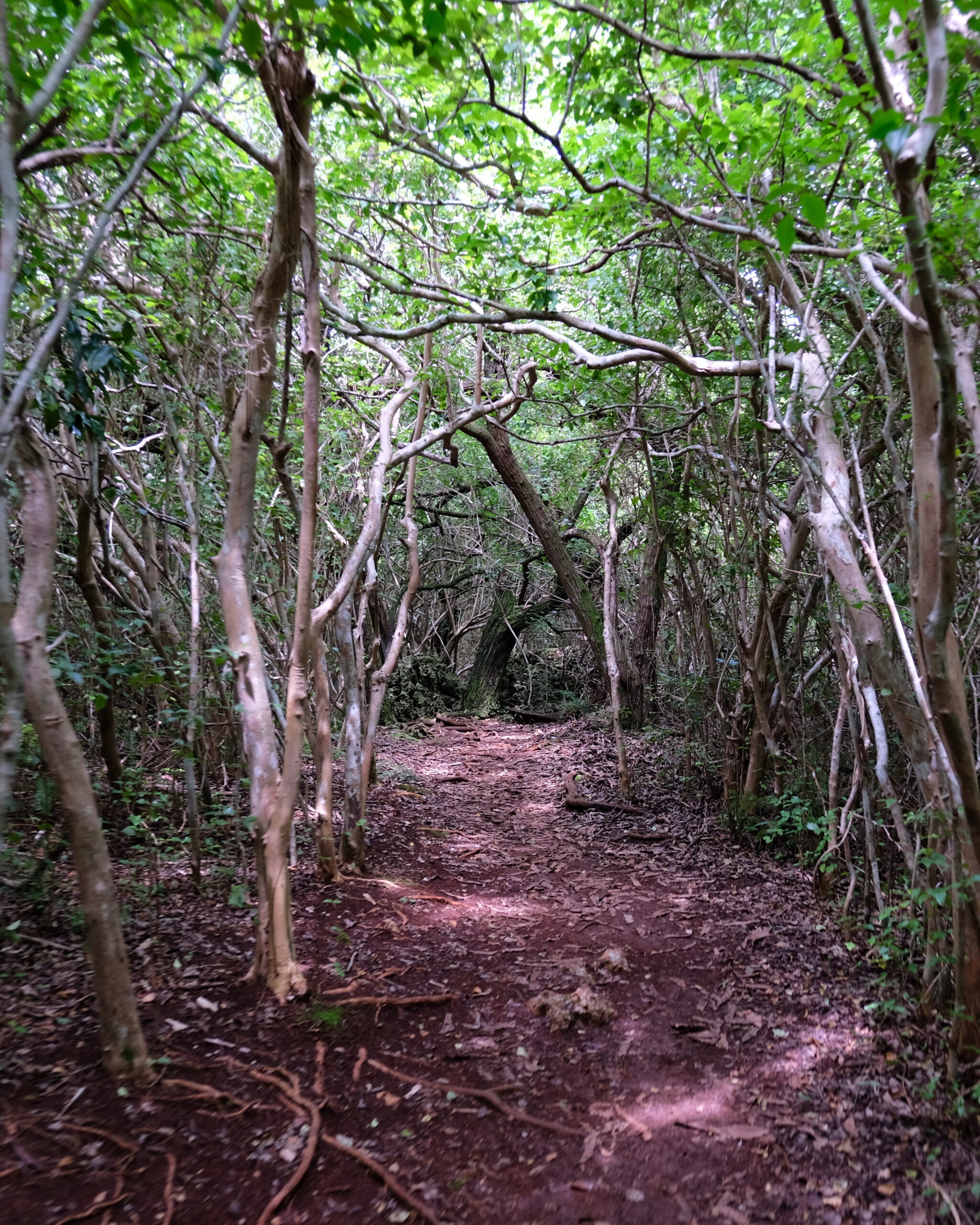 photo of a walking trail in bermuda