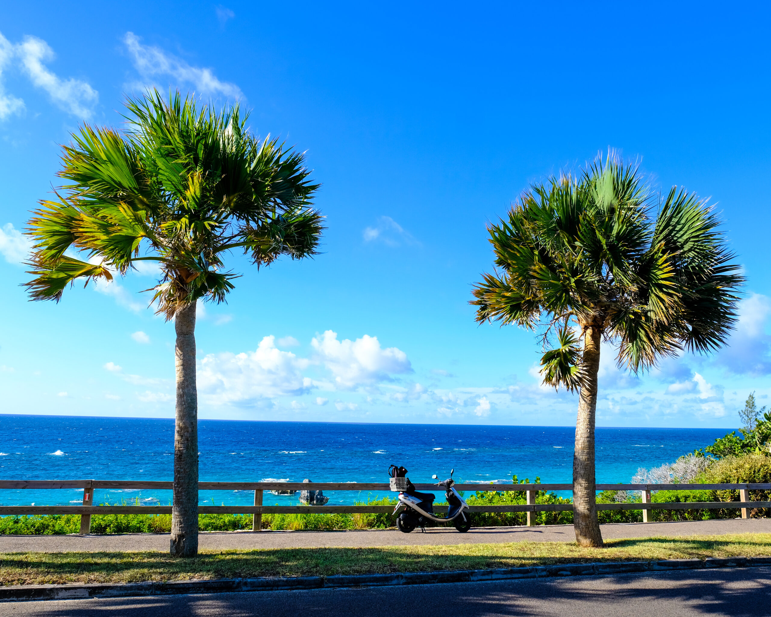 photo of two palm trees overlooking horseshoe bay in Bermuda
