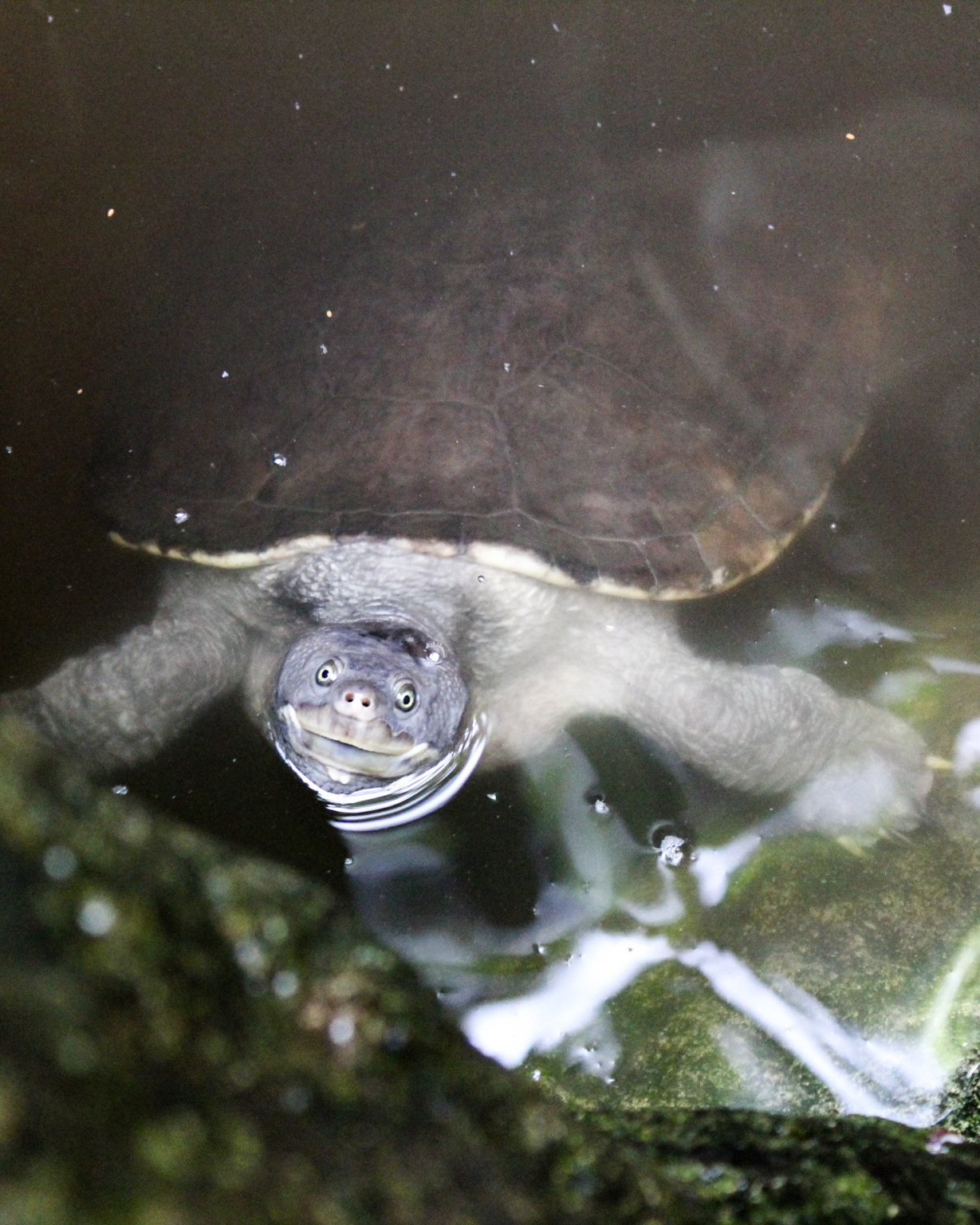 photo of a cute turtle from the Bermuda aquarium and zoo.