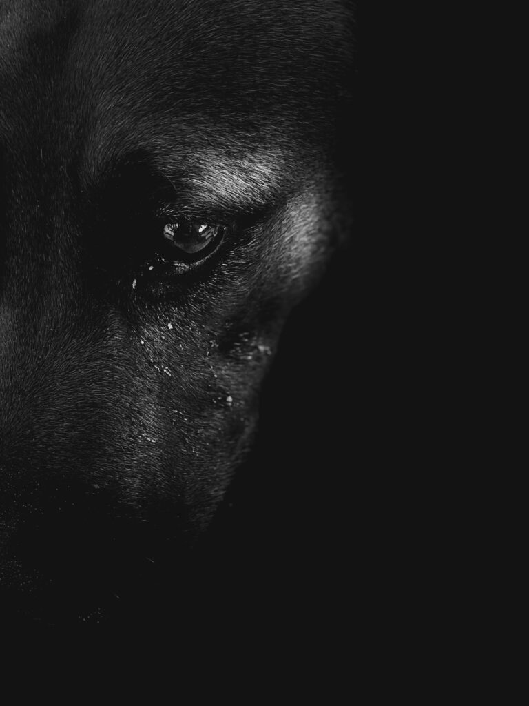 Black and white photo of dogs eye