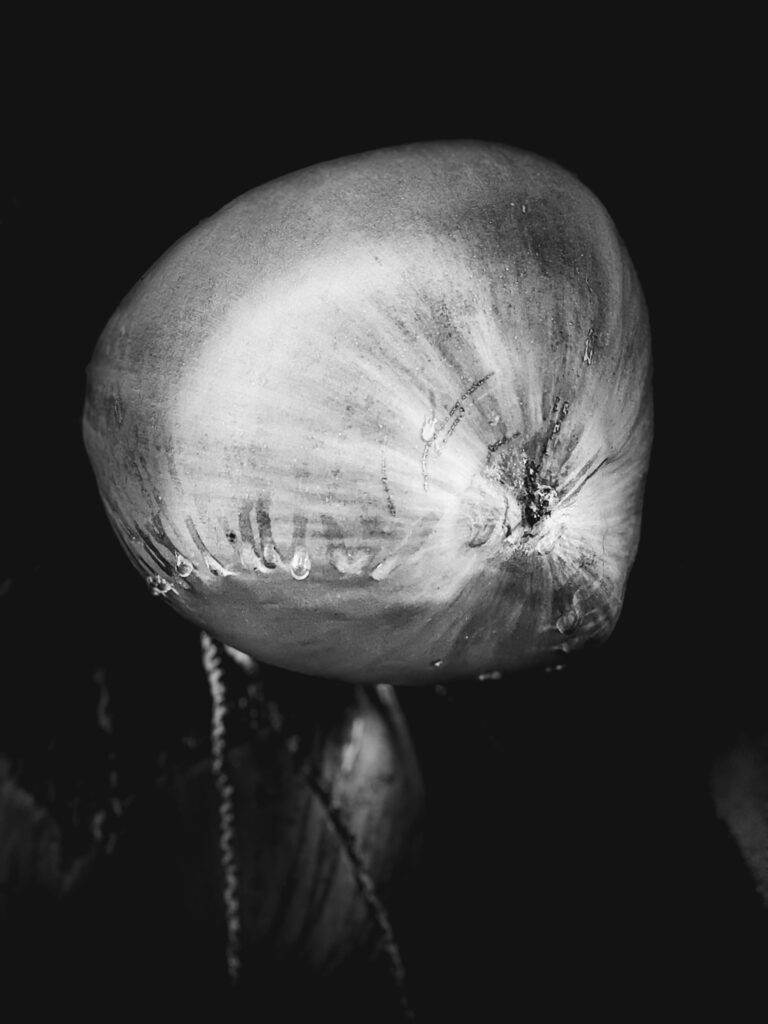 Black and white photo of a coconut