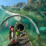 Zoo Miami Voted as One of The 10 Best Zoos in the USA - The