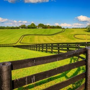 horse farm landscaping