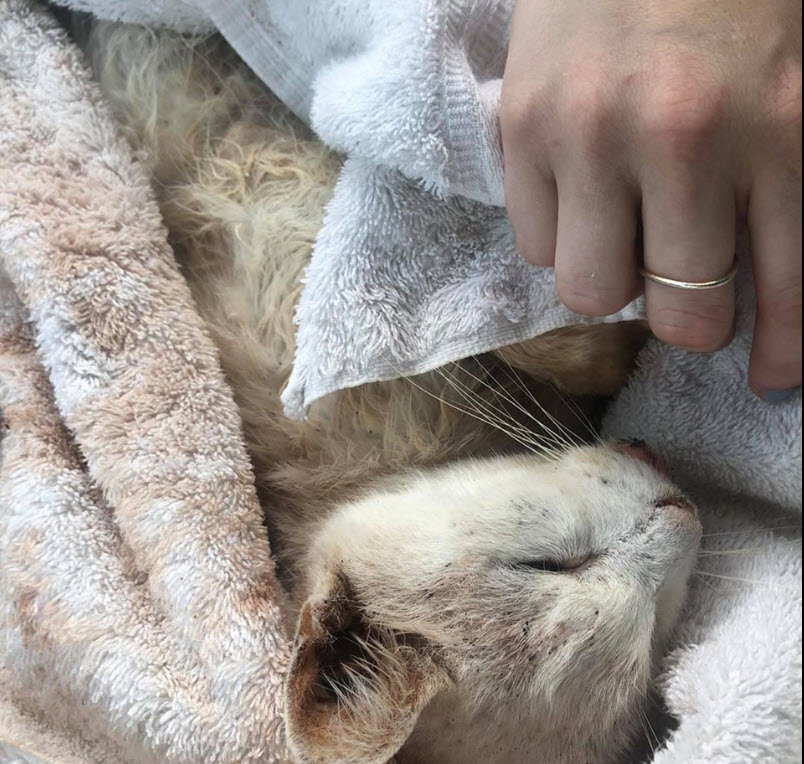 Sick Cats Emergency Fund