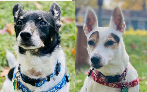 Bonded pair, Bandit and Boo, need dentals