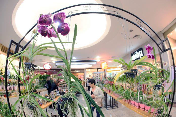 Riopreto Shopping recebe Festival de Orquídeas