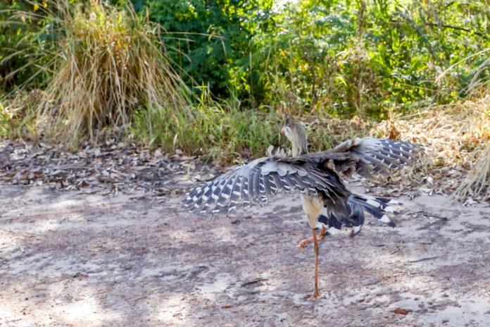 Zoo: Animais com trauma voltam a andar e são devolvidos à natureza