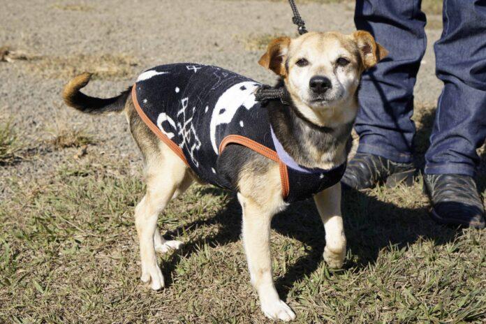 Diretoria do Bem Estar Animal lança campanha de adoção de cães e gatos
