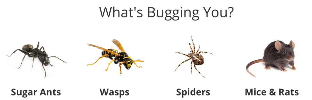 Pest Control Battle Ground WA