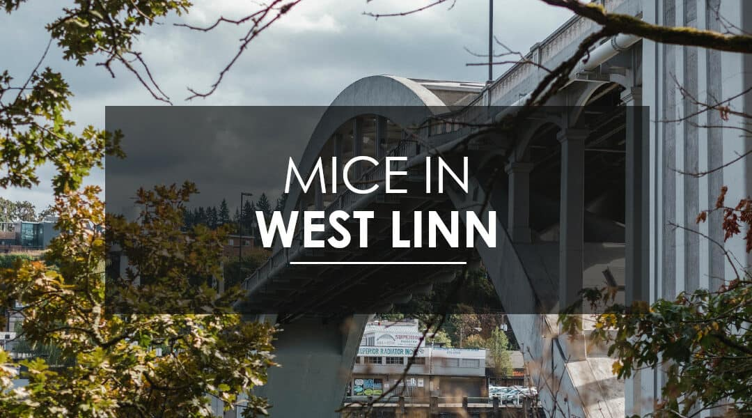 Mice in West Linn
