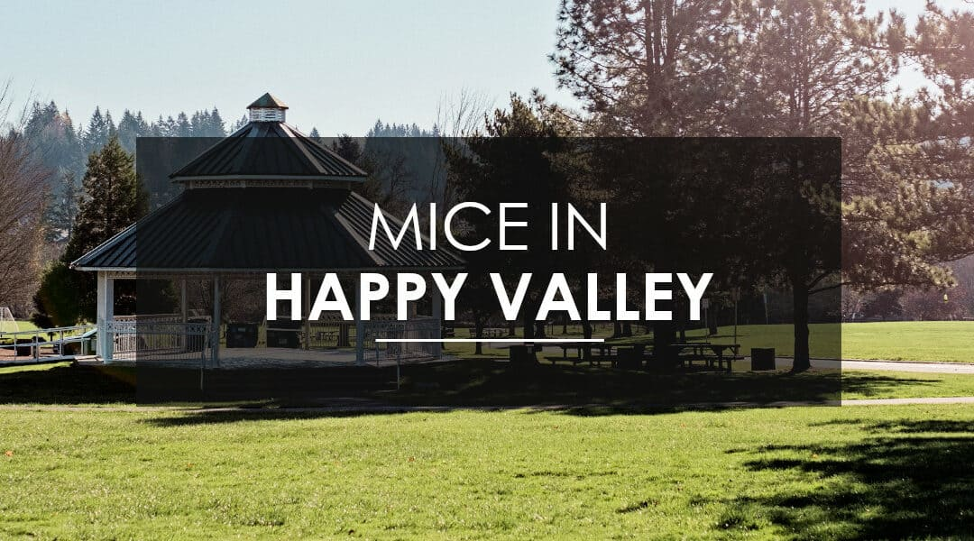 Mice Control in Happy Valley