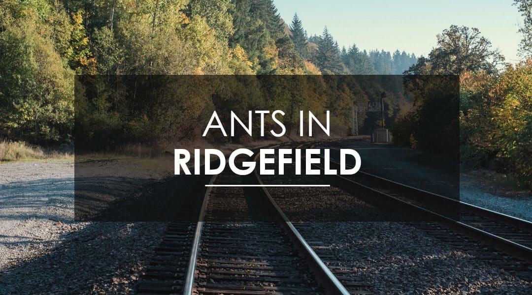 Ant Control in Ridgefield