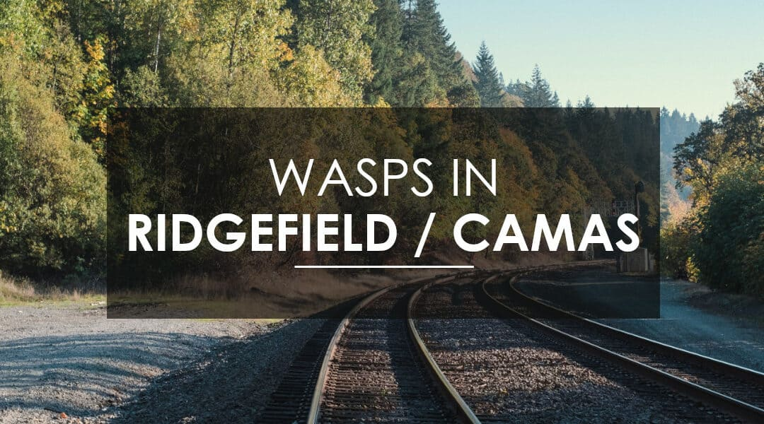 Stinging Insects in Ridgefield and Camas