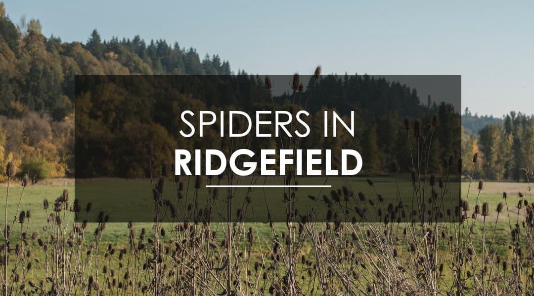 Spider Extermination in Ridgefield, WA
