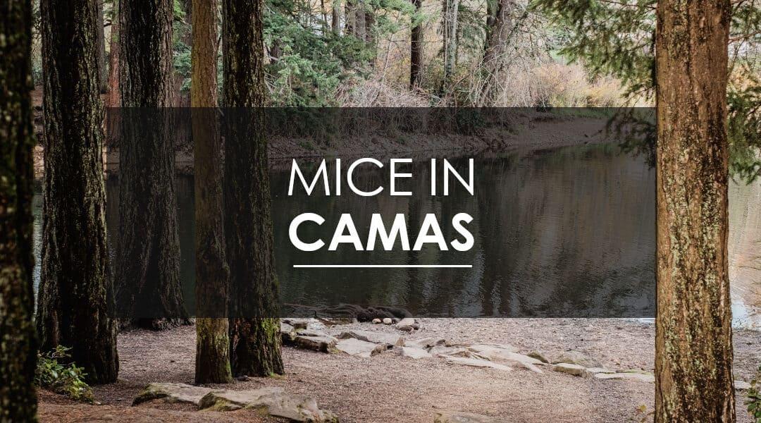 Mice in Camas, WA