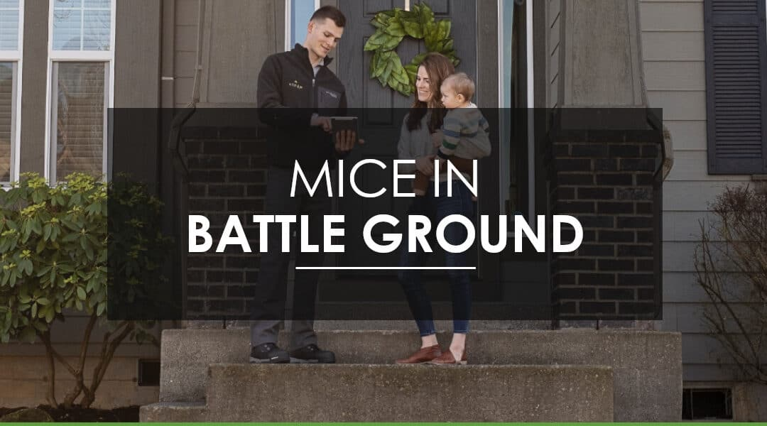 Mice in Battle Ground