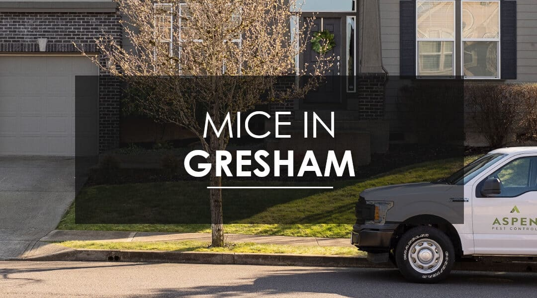 Gresham Mice Extermination: How do I know if I have a mouse infestation?