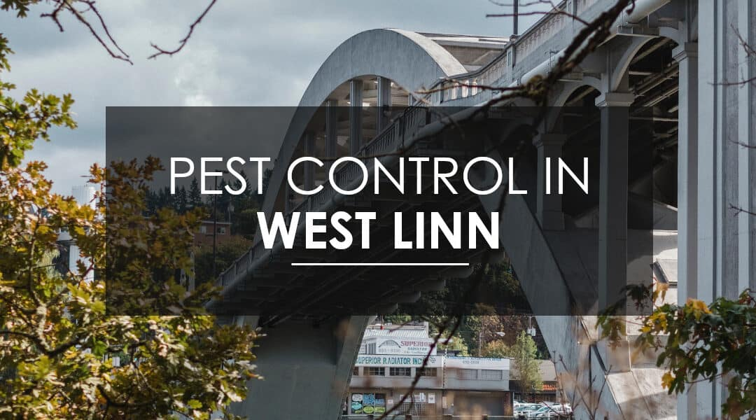 Do I Need Quarterly  Pest Control in West Linn?