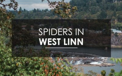 Spider Extermination In West Linn