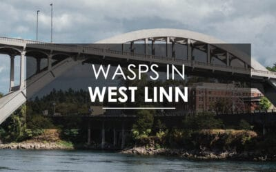 Aspen Pest Control: Wasps, Hornets, and Yellow Jackets in West Linn