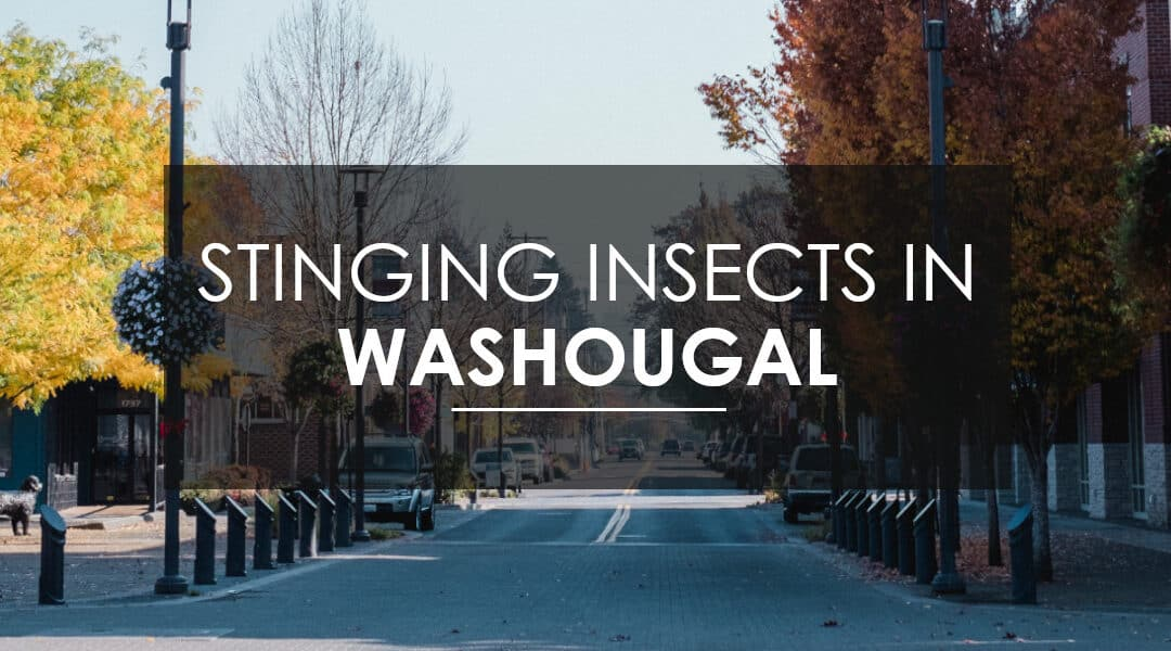 Wasps, Hornets, and  Yellow Jacket Extermination: What every Washougal Home and Business Owner Should Know