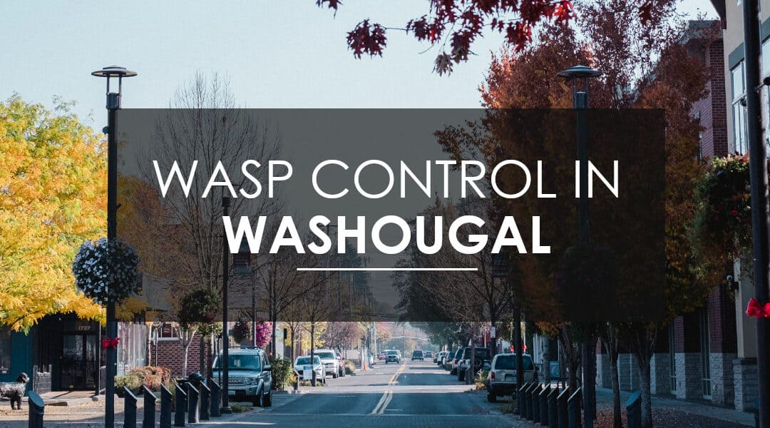 Wasp, Hornet, and Yellow Jacket Extermination in Washougal