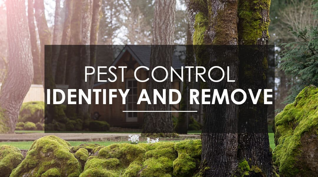 Pest Control: Identify and get rid of pests in your home