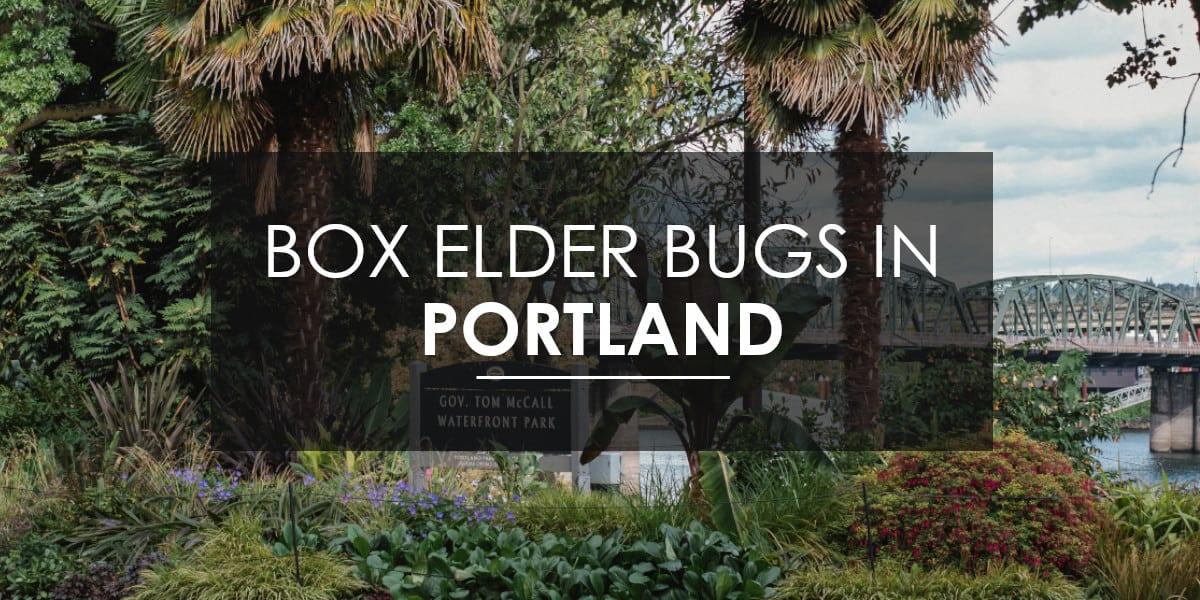 Box Elder in Portland