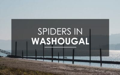 How Do I Get Rid of  Spiders in Washougal?