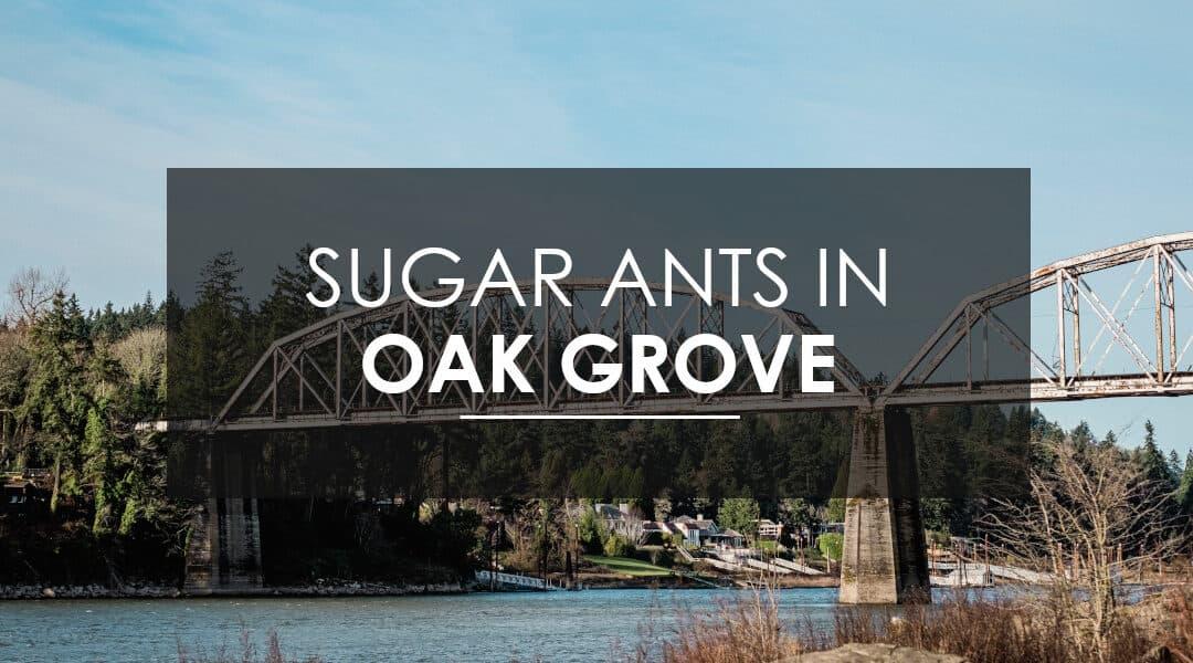 Sugar Ants in Your Oak Grove Home?