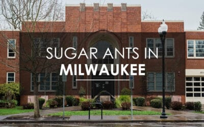 At-Home Methods for Preventing Sugar Ants in Your Milwaukee Home
