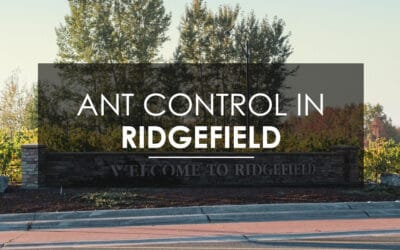 When Ridgefield Needs Carpenter Ant Extermination, Ridgefield  Calls Aspen Pest Control