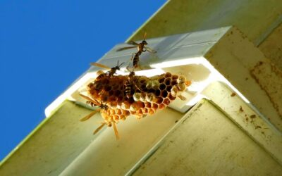 Wasps, Hornets, and Yellow Jacket Extermination in Battle Ground, WA