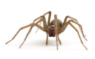 Spider Extermination in Oregon City