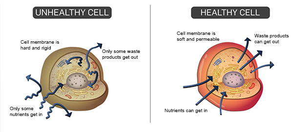 healthy cell verses unhealthyo cell