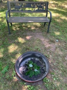After campfires, we make sure our fires are out by soaking the pit. We symbolize same by crossing live leaves.